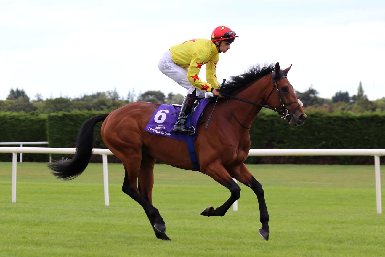 Image result for national wealth horse